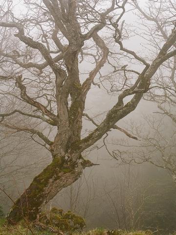 The Mist 3